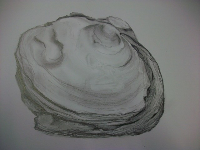Larger pencil sketch of fossil